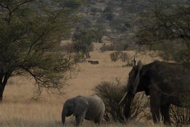Wildlife projecten in Afrika